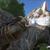 Tyrannosaurus dude11