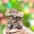Freya The Kitten xox