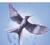 Sparrow Hazelthorn