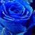 BlueRoseGal
