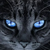 Jay's Wing WARRIORcats2507