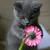 FlowerDoesBloomCat