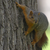 Squirrel1023