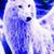 AnimalJamFrostWolf01