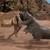 Dinocool2628