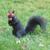 WiewiórkaMałgosia