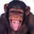 Bananek Małpanek