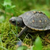 TurtleLover333