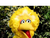 (Big Bird)