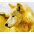 Goldwolf304