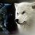WolfquestNimbus