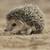 InvisibleHedgehog