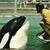 Cetacean project