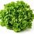 Salatovnik