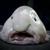 Рыб Блобыч