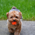 DoggyLuvver