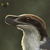 SirDragonraptor