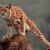 Lynx(Star Leader)