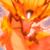 DragonKing24