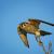 Birdadmirer