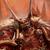 Hirexus