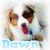 Dawnpelt Animal48086