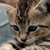 Zekkiithecat