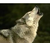 Omegawolf7