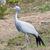 Bird2525