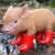 Pigsflyin4
