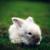 Bunniesforever224