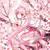 Sakura39