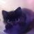 BeeTheKitty-Cat