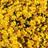 AvocadoBlossom's avatar