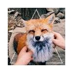 Miaou22's avatar