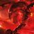 Poisonshark