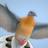 Shigeon's avatar
