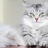 Spottedleaf lover Coldheart's avatar