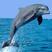 Dauph's avatar