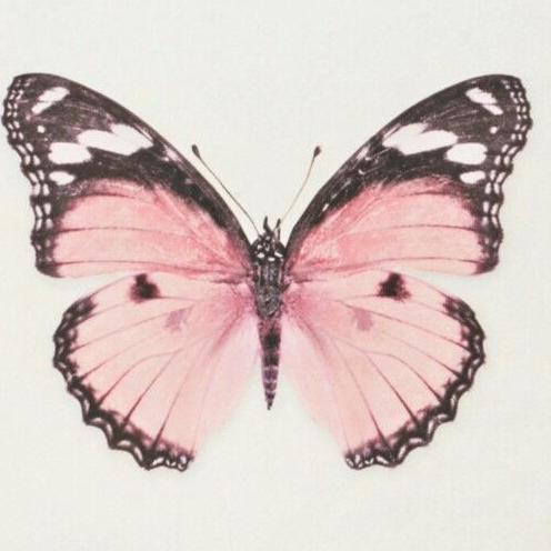 Butterflybbyxoxo's avatar