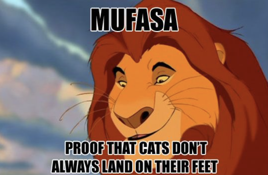 Mufasa, proof that cats don't always land on their feet.