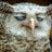 EiZenHoweLL's avatar