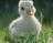 Cleverduck09's avatar