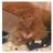 Lemonade bubbles's avatar