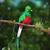 Quetzal37