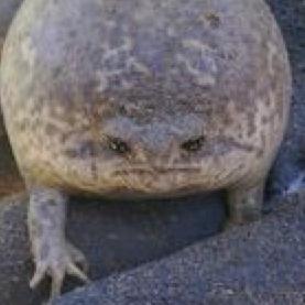 PiggyPeep's avatar
