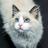 Викуша's avatar