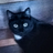 Felinemeower's avatar
