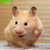 IdeaHamster