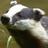 UniversalBadger's avatar